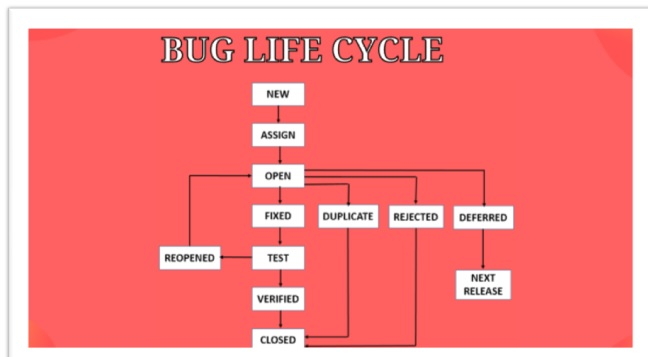 Buglife cycle